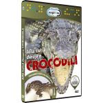 Afla totul despre - Crocodili DVD