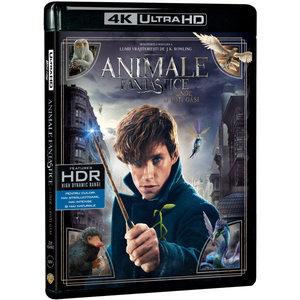 Animale fantastice si unde le poti gasi Blu-ray 4K